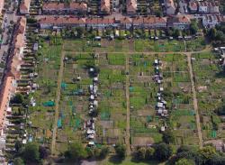 Jardins ouvriers à Thornton Heath